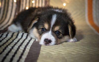 Hundesenge – derfor skal du forkæle din hund med én