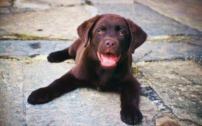 Menneskemad din hund godt må få