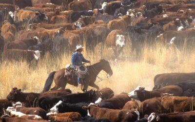 Væk cowboydrømmen til live med en riderejse