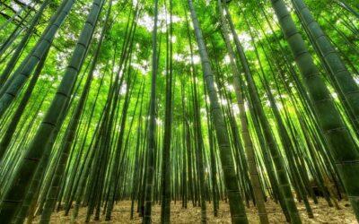 JBS bambus underbukser er topkvalitets underbukser